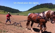 Widget_photo_kisskiss_cheval_titre