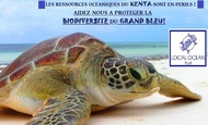 Widget_tortue_pr_sentation
