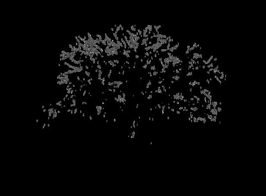 Quercus_film_nir