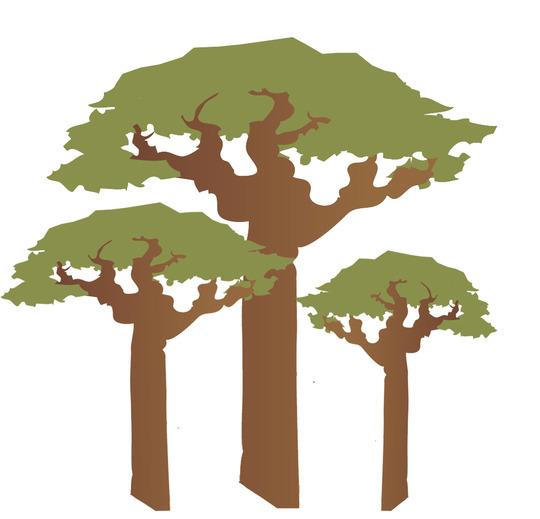 Baobab_copie