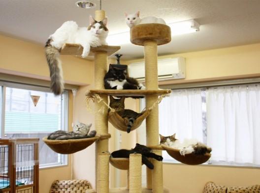 Cat-cafe-chat-japon-tokyo-3-528x393