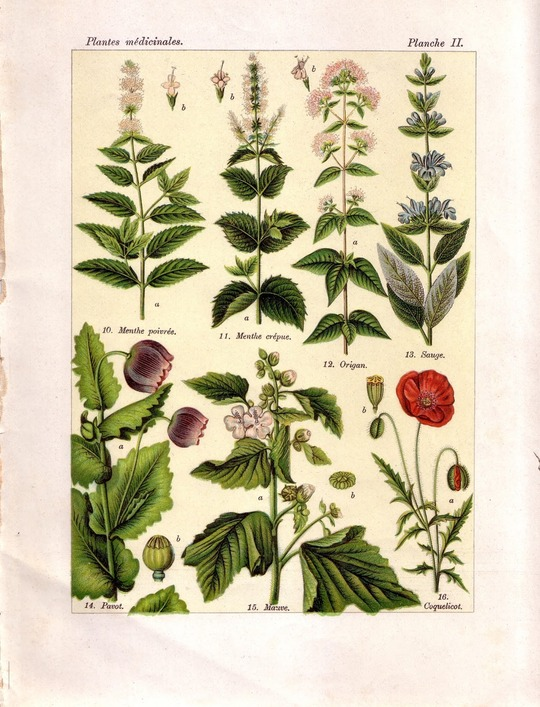 Plantes_sauvages
