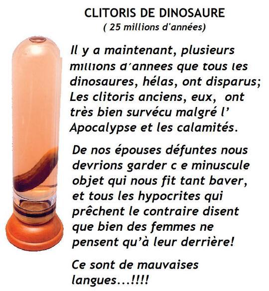 Clitoris_de_dinosaure