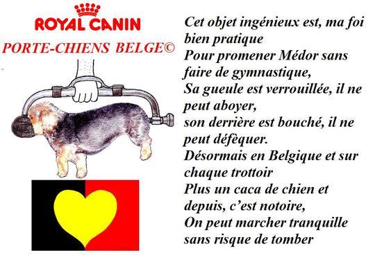 Porte_chien_belge