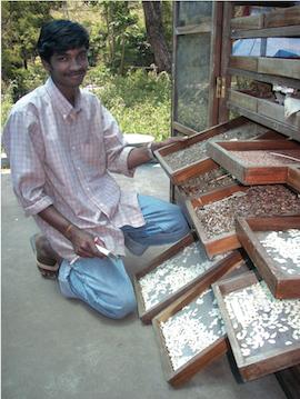 Indien_semences