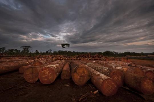 Wood-624x415