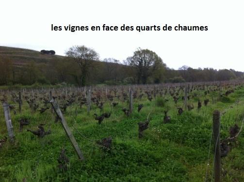 Image_vigne_texte