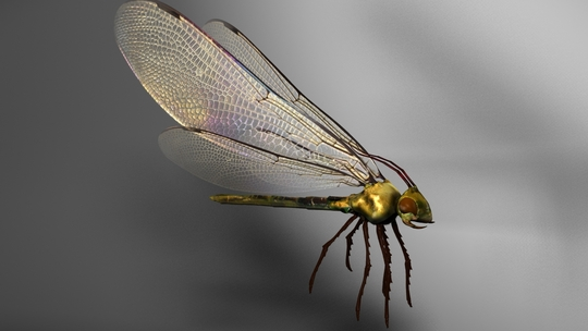 Mpc_insecte