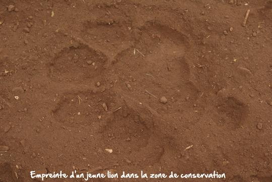 Print_lion