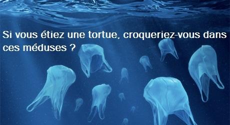 Sacs-meduses
