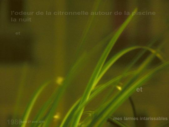 Pour_le_site_27_avril_2010__la_citronelle