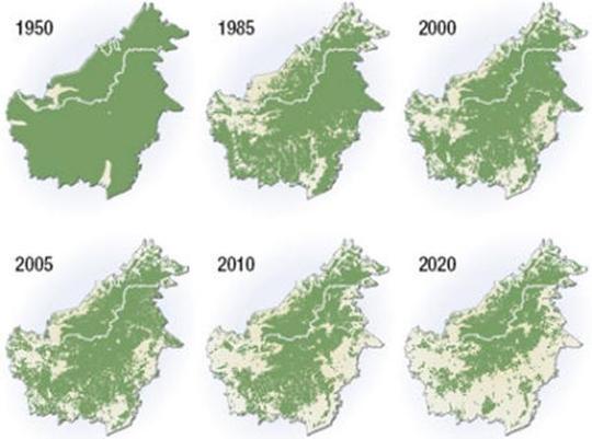 Penan-borneo-luttent-deforestation-l-1