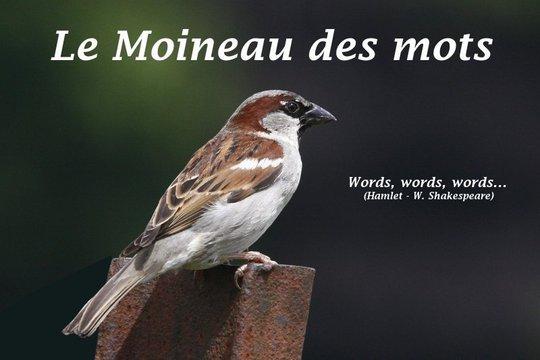 Le-moineau1