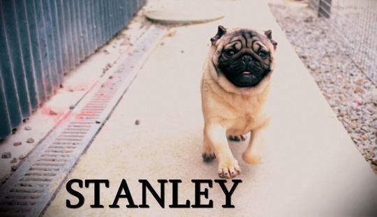 Stanleyyyy
