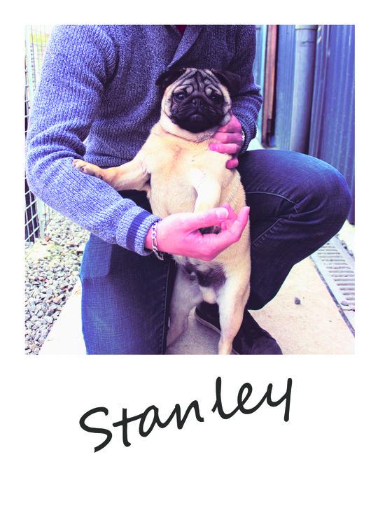 Stanley_polaroid