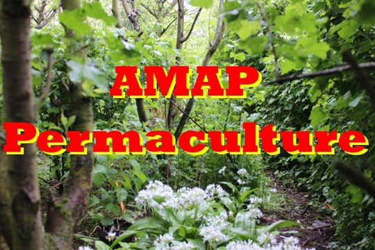 Logo-amap-permaculture