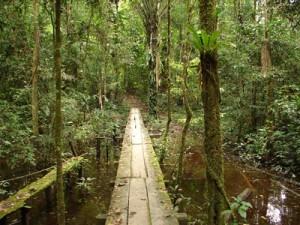 Amazonie-91952-300x225