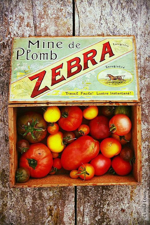 130717_linda_louis_pour_nature._cageot_tomates