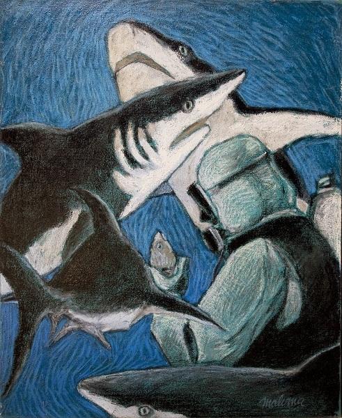 Requin_nassau_k