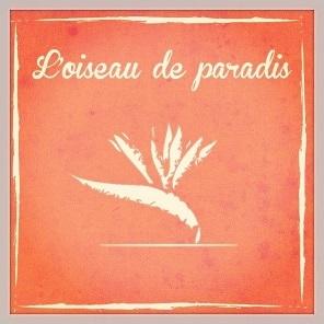 L_oiseau_de_paradis