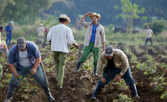 Cubanfarmers.jpg.crop.rectangle3-large