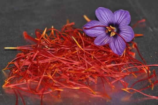 Pistils_de_crocus_sativus