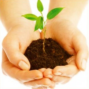 Planter-un-arbre_png