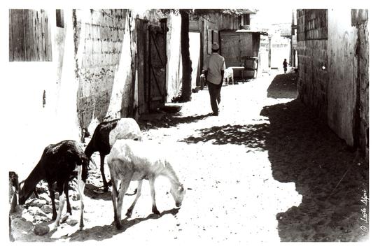 Femmes-emigration