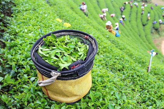 Icietailleurs_48004176_2012_srilanka