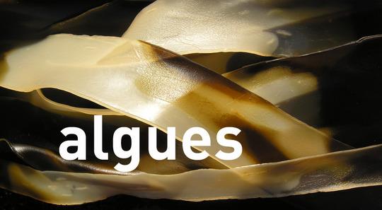 Algues5249r2