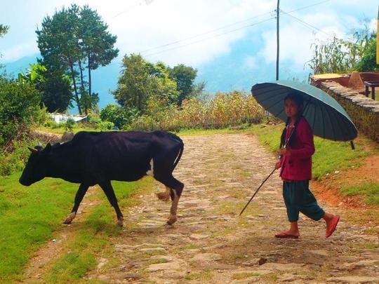 L'agriculture et le trekking, les deux principaux moteurs de l'économie népalaise.