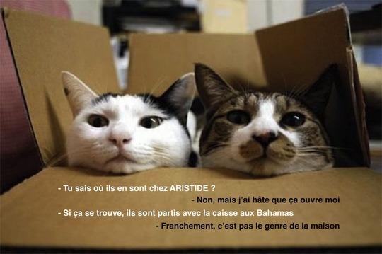 Cartoncats