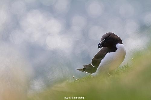 20130528_pinguin_torda_43