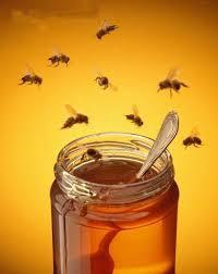 Verger_miel_abeilles