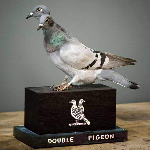 Pigeonadeuxtetes
